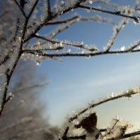зима в Сибири :: Олеся Селиванова