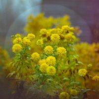 цветочки :: Ярослав Макеев