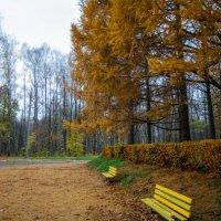 Горящая осень :: Иван Богданов