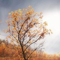 Осень :: Дмитрий TDAdiz
