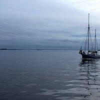 Финский залив :: Таню Захарова