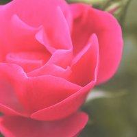 цветы :: Таню Захарова