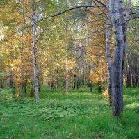 Осень в парке :: Елена Перевозникова