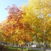 золотая осень :: тамара антошкина