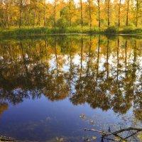 осень на пруду :: Евгений Григорьев