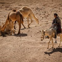 Бедуин :: Лана Григорьева