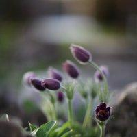 пробуждение весны :: Дарина Половец