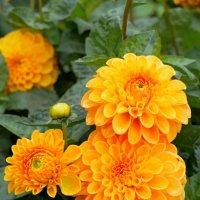цветы :: Алексей Кудрявцев