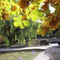 Осень :: Ольга Нагаева