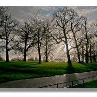 ..английский парк. :: mikhail grunenkov