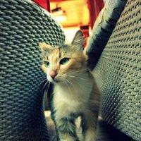 Cat) :: Sonia Carlsberg
