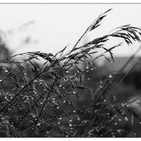 За день до снегопада :: Андрей Еремеев