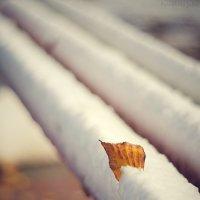 зимняя осень :: Julia Panikhina