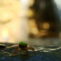 Паук возле водопада. :: Владимир Хрущ