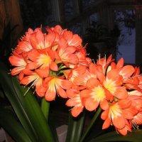 ещё цветок :: Леонид Виноградов