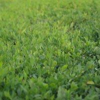 grass (трава) :: Александр Неклеса
