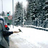 птица на границе=)Финляндия :: Натали Каменская