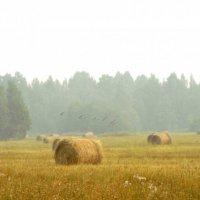 утро туманное,утро седое... :: Натали Каменская