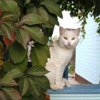 Просто котик... :: Лена L.