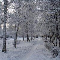 Зимняя аллея. :: Елизавета Успенская