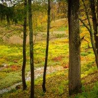 Яркие краски осени :: Vasiliy V. Rechevskiy