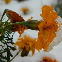 Нежданный снег :: Lina Liber