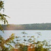 Forest :: Мария Пугачёва