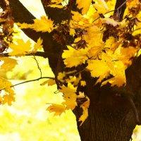 осень :: сергей гуслистый