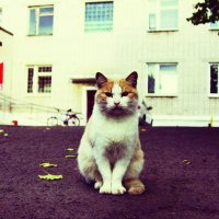 кот :: сергей гуслистый
