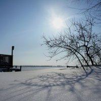 8 марта в Сибири :: Олеся Селиванова
