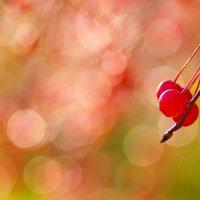 Последние яблочки :: Andrey Veretennikov