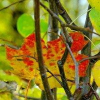 Осенний лист :: Дмитрий Рожанский