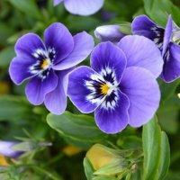 Цветок :: Денис Дворянкин