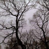 Trees :: Elena Sergeeva