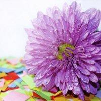 фиолетовый :: Алёна Дягелева