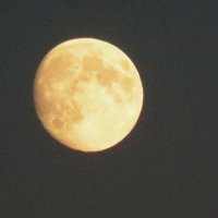 луна :: Альбина Еликова