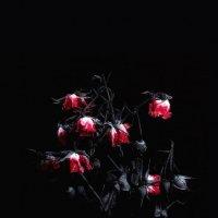 um morta rosa :: Эльдар Калантаров
