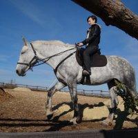 конь  бледный :: Дмитрий Потапов