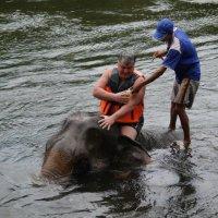 решили мы помыться со слоном :: валерий телепов