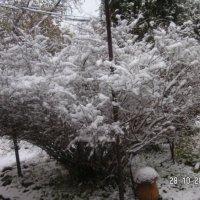 теперь снег :: Леонид Виноградов