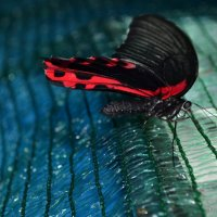 Бабочка :: Денис Дворянкин