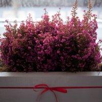 цветы :: Илья Покровский