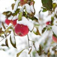 первый снег :: Эльвира Брудова