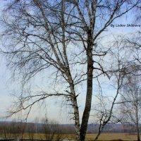Осень... :: Любовь Шихова