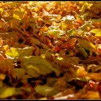 просто листья :: Анастасия Амельченко