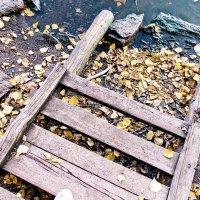 Для желающих осеннего купания... :: Светлана Игнатьева