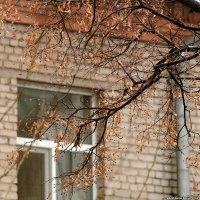 Дождь за окном :: Sergei Khandrikov