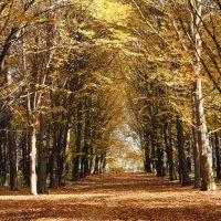 Осень :: Алан Мамуков