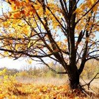 ...осень золотом одета.. :: Александр Герасенков