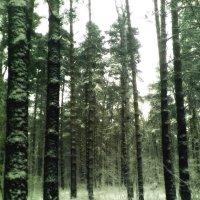 Сказочньiй лес :: Игорь Москаленко